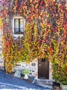 Autumn Foliage around Tuscan Villa by Terry Eggers
