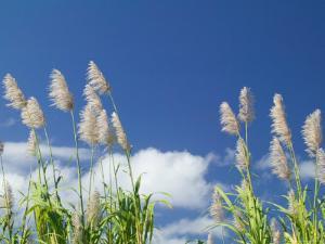 Back Country Sugar Cane Field, Kauai, Hawaii, USA by Terry Eggers