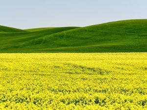Canola field in Spring by Terry Eggers