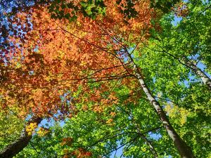Changing seasons in Upper Michigan by Terry Eggers