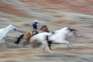 Cowboy at Full Gallop in Motion by Terry Eggers