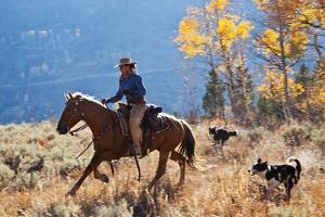 Cowgirl and Her Dogs by Terry Eggers