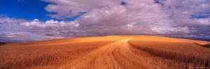 Cut Road Through Wheat Field, Colfax, Washington, USA by Terry Eggers