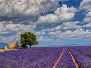 France, Provence, Old Farm House in Field of Lavender by Terry Eggers