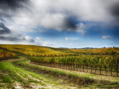Italy, Montepulciano, Autumn Vineyard in full color by Terry Eggers