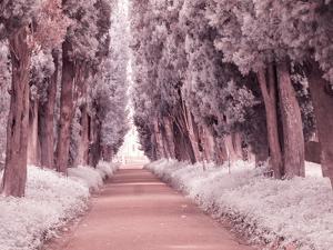 Italy, Puglia, Tivoli. Tree lined road, Villa Adriana by Terry Eggers