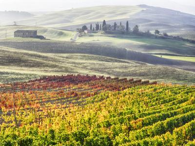 Italy, San Quirico, Autumn Vineyards, San Quirico by Terry Eggers