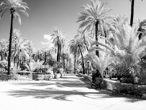 Italy, Sicily, Palermo. Palm trees in the garden Bonanno Palermo by Terry Eggers