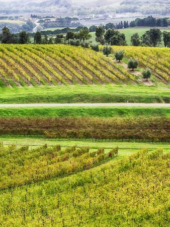 Italy, Tuscany, Autumn Vineyards by Terry Eggers
