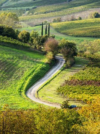 Italy, Tuscany, Chianti, Autumn, Road running through vineyards by Terry Eggers