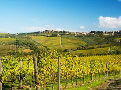 Italy, Tuscany, Chianti, Panzano, Autumn Vineyard by Terry Eggers