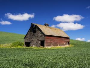 Old Red Barn in a Field of Spring Wheat by Terry Eggers