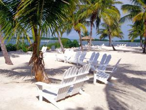 Palm Trees and Beach Chairs, Florida Keys, Florida, USA by Terry Eggers