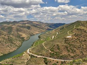 Portugal, Douro Valley. View of Douro River and vineyards by Terry Eggers
