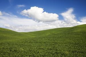 Rolling Hills of Green Spring Wheat and Puffy Clouds by Terry Eggers