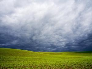 Spring Field of Peas with Storm Coming by Terry Eggers