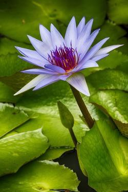 Tropical Gardens with Water Lotus Flower in Full Bloom by Terry Eggers