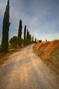 Tuscan Cypress Lined Back Road by Terry Eggers