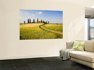 Tuscan Villa Nearing Harvest, Tuscany, Italy by Terry Eggers