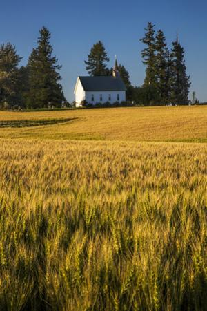 USA, Idaho, Freeze Community Church surrounded by harvest Wheat by Terry Eggers