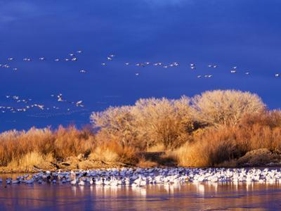 USA, New Mexico, Bosque del Apache by Terry Eggers