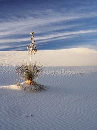 USA, New Mexico, White Sands National Monument, Sand Dune Patterns and Yucca Plants by Terry Eggers