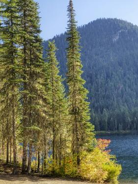 USA, Washington State. Evergreens standing tall with Cooper Lake and Autumn color. by Terry Eggers
