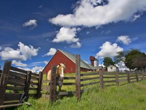 USA, Washington State, Palouse Country, Colfax, Old Red Barn with a Horse by Terry Eggers