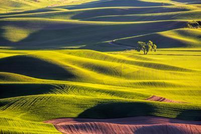 USA, Washington State, Palouse Country, Lone Tree in Wheat Field by Terry Eggers