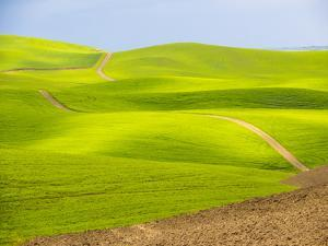 USA, Washington State, Palouse Region. Backcountry road leading through a field of wheat by Terry Eggers