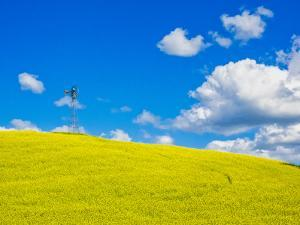 USA, Washington State, Palouse Region. Canola fields with weathervane by Terry Eggers