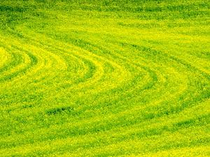 USA, Washington State, Palouse Region. Patterns in Spring Canola field by Terry Eggers