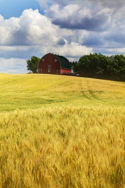 USA, Washington State. Red Barn Surrounded by Ripe Wheat (Pr) by Terry Eggers