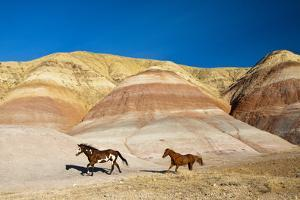 USA, Wyoming, Shell, Heard of Horses Running along the Painted Hills of the Big Horn Mountains by Terry Eggers