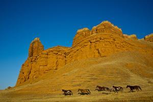 USA, Wyoming, Shell, Heard of Horses Running along the Red Rock hills by Terry Eggers