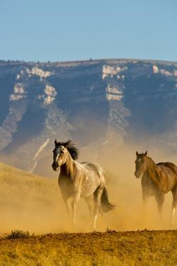 USA, Wyoming, Shell, Horses Running along the Red Rock hills of the Big Horn Mountains by Terry Eggers