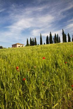 Villa with Wheat Fields, Cypress Trees, Poppies, Pienza, Tuscany, Italy by Terry Eggers
