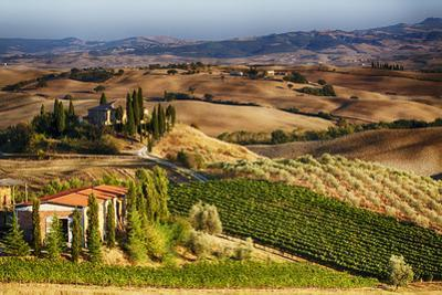 Vineyards Surround the Belvedere House by Terry Eggers