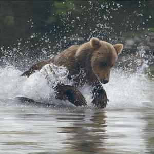 Making a Splash by Terry Isaac