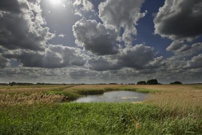 Lakenheath Fen Rspb Reserve, Suffolk, UK, May 2011 by Terry Whittaker