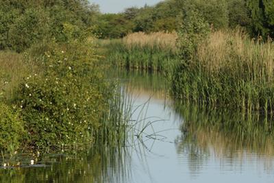 Lode (Waterway) on Wicken Fen, Cambridgeshire, UK, June 2011 by Terry Whittaker