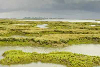 View of Regenerated Saltmarsh Landscape at High Tide, Essex, England, UK, July by Terry Whittaker