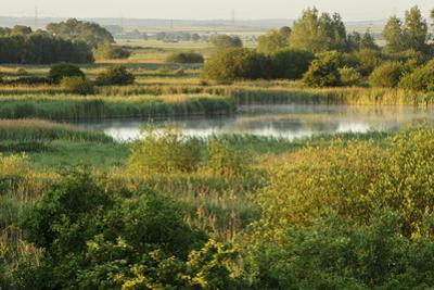 Wicken Fen Landscape, Cambridgeshire, UK, June 2011 by Terry Whittaker