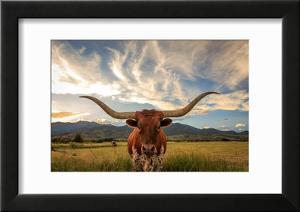 Texas Longhorn Steer in Rural Utah  Usa.