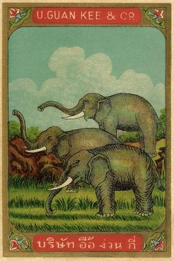 Thai Cotton Label with Elephants