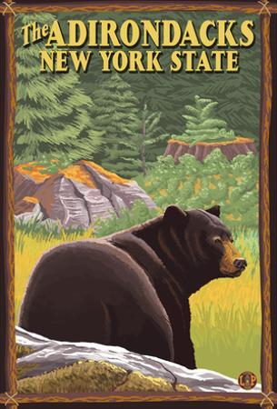 The Adirondacks, New York State - Black Bear In Forest