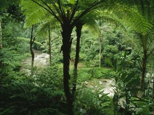 The Agung River Cuts Through a Dense Rain Forest of Ferns and Trees