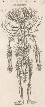 The Arteries of the Human Body