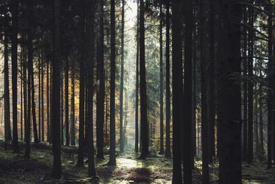 https://imgc.allpostersimages.com/img/posters/the-autumnal-teutoburg-forest-with-sunlight_u-L-Q1EXMC60.jpg?artPerspective=n