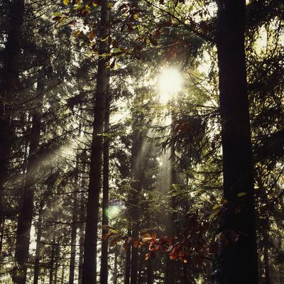https://imgc.allpostersimages.com/img/posters/the-autumnal-teutoburg-forest-with-sunlight_u-L-Q1EXMQ50.jpg?artPerspective=n